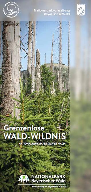 Grenzenlose Wald-Wildnis. Foto: Nationalpark Bayerischer Wald.