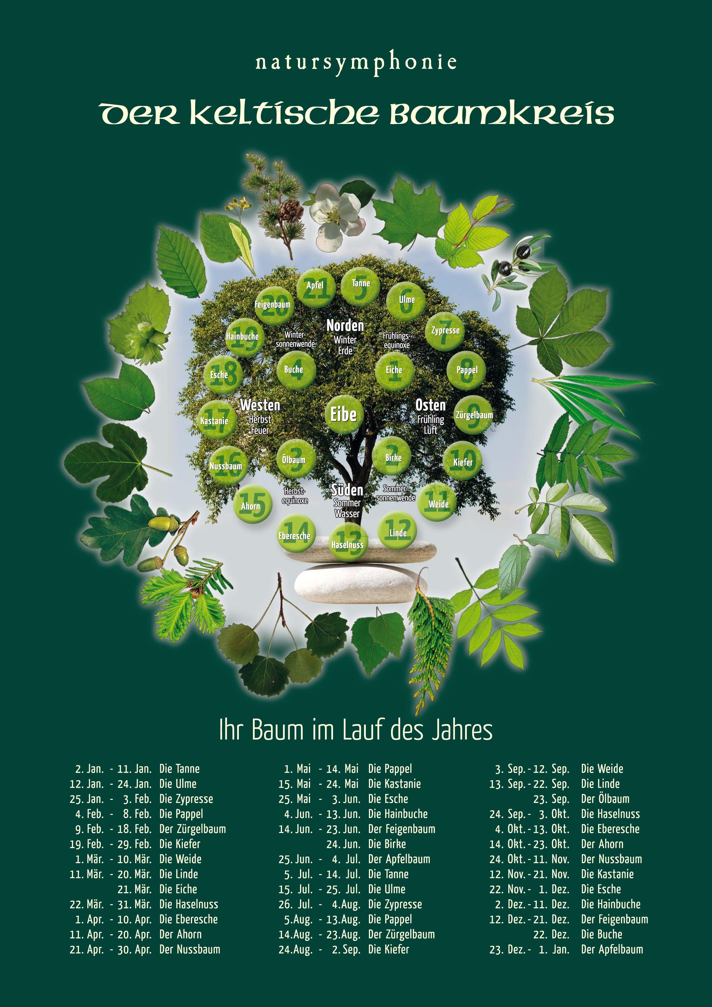 Natursymphonie - Der keltische Baumkreis. Foto: Michael Glass - natursymphonie